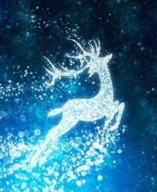 starry reindeer